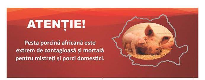 Având în vedere evoluţia agresivă a pestei porcine africane în România, în condiţiile în care gradul