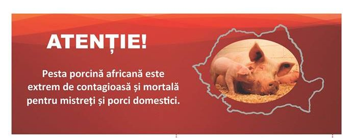 Informatii utile pesta porcina